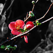 Plum Blossom 3 Art Print