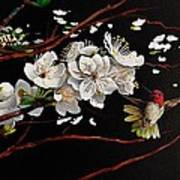 Plum Blossoms And Anna's Hummingbird Art Print