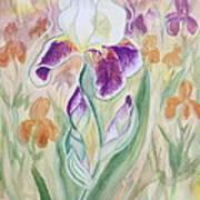 Plum Pudding Iris Art Print