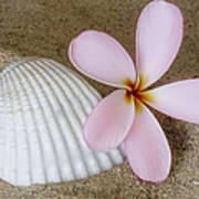 Plumeria Flower And Sea Shell Art Print