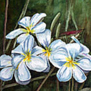 Plumeria Art Print