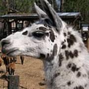 Polka Dot Llama Pogo Rules Art Print