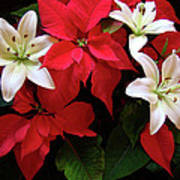 Poinsettia And Lilies Art Print