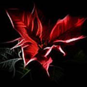 Poinsettia - Christmas Flower Art Print