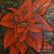 Poinsettia/ Christmass Flower Art Print