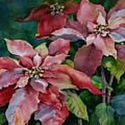 Poinsettia Pair Art Print