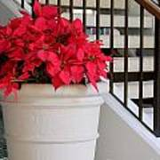 Poinsettias By The Stairway Art Print