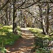 Point Lobos Cypress Path Art Print