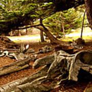 Point Lobos Whalers Cove Whale Bones Art Print