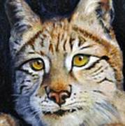 Pointed Advantage - Siberian Lynx Art Print