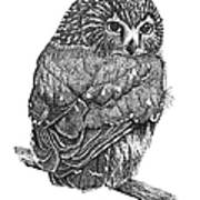 Pointillism Sawhet Owl Art Print by Renee Forth-Fukumoto