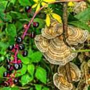 Poke And Bracket Fungi Art Print