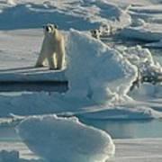 Polar Bear And Cub Art Print