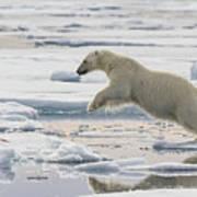 Polar Bear Jumping  Art Print