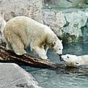 Polar Bear Kiss Art Print