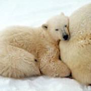 Polar Bear Mother & Cub Art Print