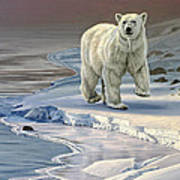 Polar Bear On Icy Shore    Art Print