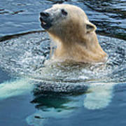 Polar Bear Swim In Cold Water Art Print