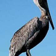 Pole With Pelican  Art Print