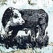 Polled Hereford Bull 26 Art Print