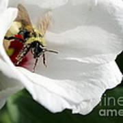 Pollenated Bumblebee Art Print