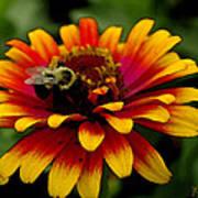 Pollenating Bumblebee Art Print