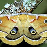 Polyphemus Moth Art Print