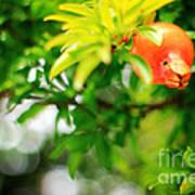 Pomegranate On A Tree Art Print