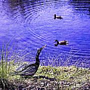 Pond Days Art Print