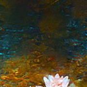 Pond Lily 27 Art Print