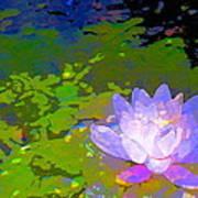 Pond Lily 29 Art Print