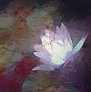 Pond Lily 32 Art Print