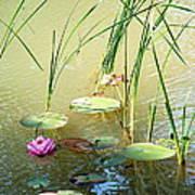 Pond  Reflections Art Print by Elmer Baez
