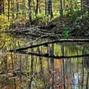 Pond Reflects Art Print