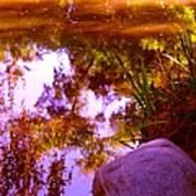 Pond Reflextions Art Print
