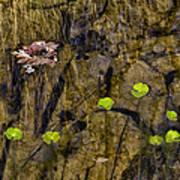 Pond Scene Art Print