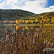 Pond With Autumn Foliage  Art Print