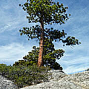 Ponderosa Pine And Granite Boulders Art Print