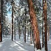 Ponderosa Winter Art Print