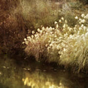 Pond's Edge Art Print