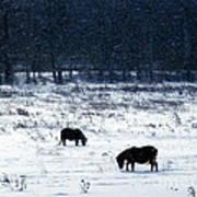 Ponies In The Snow Art Print