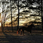 Pony's Evening Pasture Trot Art Print