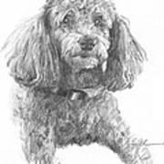 Poodle Pencil Portrait Art Print