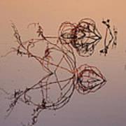 Pool Reflections At Dawn Art Print