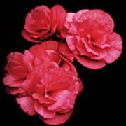Pop Of Pink Art Print