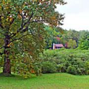 Poplar Tree In The Valley Art Print