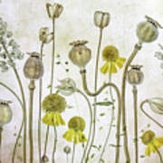 Poppies And Helenium Art Print