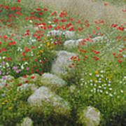 Poppies And Wildflowers Art Print