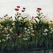 Poppies, Daisies And Thistles Art Print