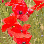 Poppies Vi Art Print